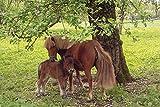 Artland Qualitätsbilder I Wandtattoo Wandsticker Wandaufkleber 120 x 80 cm Tiere Haustiere Pferd Foto Grün D6DS Pony Mutterglück