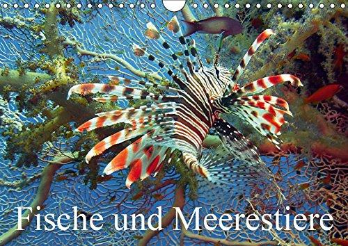 Fische und Meerestiere (Wandkalender 2019 DIN A4 quer): Die farbenfrohe Unterwasserwelt unserer Ozeane (Monatskalender, 14 Seiten ) (CALVENDO Tiere)