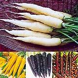 Inkeme Giardino - 100 pezzi bio carote estive F1 semi carote colorate carota mix di semi lattuga tubo vegetale semi di ortaggi Hardy perenne per giardino balcone/patio