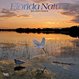Florida Nature 2019 Square Foil