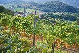 Vipava 1894 Weißwein Bag in Box 5 Liter Cuvee weiß – Sauvignon Rebula Weißwein in Box 5 Liter (5 l) - 2
