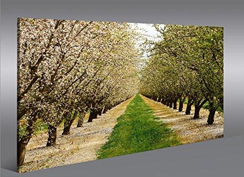 bild-auf-leinwand-bluhende-baume-fruhling-mandelbaume-1k-leinwandbild-wandbild-poster-von-islandburn