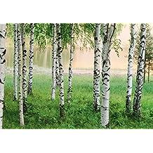 Fototapete birkenwald  Suchergebnis auf Amazon.de für: fototapete birkenwald