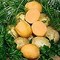Gärtner Pötschke Kartoffel Andean Sunside, 1 kg von Gärtner Pötschke bei Du und dein Garten