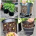 Kartoffel-Pflanztopf PotatoPot® von Gärtner Pötschke bei Du und dein Garten