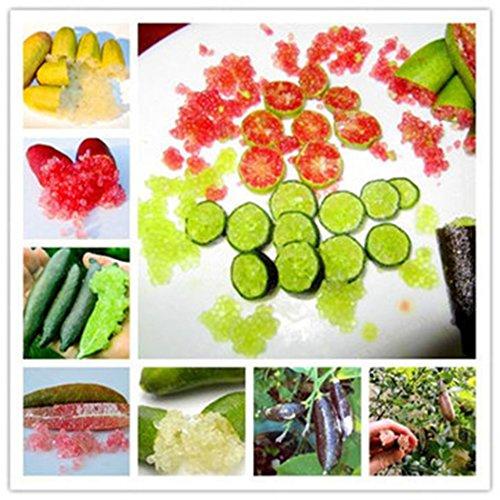 mymotto 20 Pcs Finger Limes Citrus Orange Graines Jardin Balcon Bonsaï Fruit Arbre Semence Plantation (Vert)