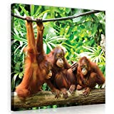 Welt-der-TräumeWANDBILD CANVASBILD Wandbild Leinwandbild Kunstdruck Canvas | Orangutans im Dschungel | O5 (40cm. x 40cm.) | Canvas Picture Print PP10230O5-MS | Natur Tier Tiere Wild Wilde Affe Affen Orangutan