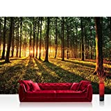 Vlies Fototapete 350x245 cm PREMIUM PLUS Wand Foto Tapete Wand Bild Vliestapete - Wald Tapete Sonnenuntergang Wald Bäume Wiese gelb - no. 639