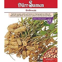 Erdnuss von Dürr-Samen