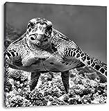 Monocrome, Schildkröte über Korallenriff, Format: 40x40 auf Leinwand, XXL riesige Bilder fertig gerahmt mit Keilrahmen, Kunstdruck auf Wandbild mit Rahmen, günstiger als Gemälde oder Ölbild, kein Poster oder Plakat