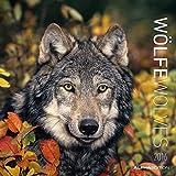 Wölfe 2016 - Wolves - Broschürenkalender (30 x 60 geöffnet) - Tierkalender - Wandplaner