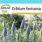 SAFLAX - Geschenk Set - Blauer - Natternkopf - 100 Samen - Echium fastuosa