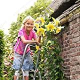 200pcs / bag raras semillas Lily no lirio de los bulbos Es es la semilla Semillas Bonsai flor del lirio planta deliciosa fragancia para el hogar y jardín blanca