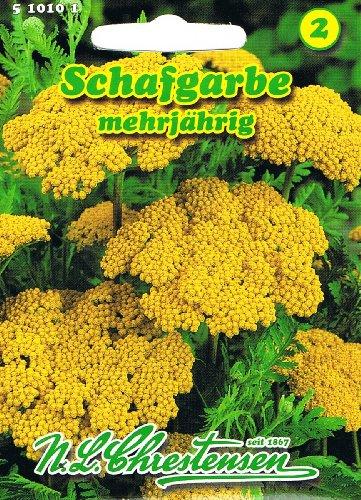 Schafgarbe Bronzegelb 'Achillea filipendulina' Trockenblume langlebige Staude