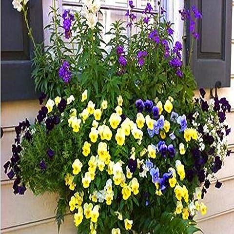 Pretty Flowers seme raro Hanging Nasturtium piantare