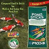 Prodac Pond Color Stick MANGIME 5 kg + 2.5 Gratis Carpe Koi Pesci Rossi LAGHETTO