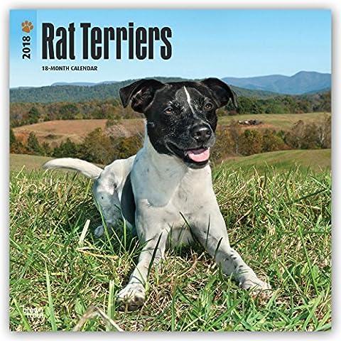 Rat Terriers - Rat Terrier 2018 - 18-Monatskalender mit freier DogDays-App: Original BrownTrout-Kalender [Mehrsprachig] [Kalender] (Wall-Kalender)