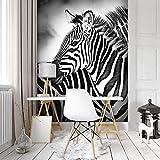 FORWALL Fototapete Tapete Zebra Weiss-Schwarz P4A (254cm. x 184cm.) Photo Wallpaper Mural AMF10159P4A Gratis Wandaufkleber Natur Wild Wilde Tier Tiere Afrika Zebr Zebras