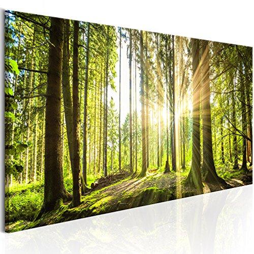 murando - Bilder Wald 135x45 cm Vlies Leinwandbild 1 TLG Kunstdruck modern Wandbilder XXL Wanddekoration Design Wand Bild - Waldlandschaft Natur Panorama Baum c-B-0077-b-b