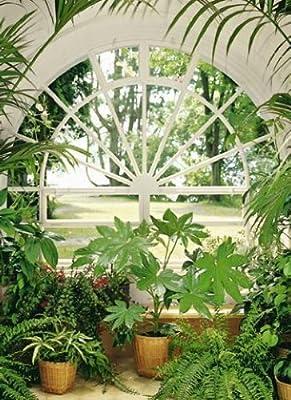 1art1 40533 Pflanzen - Wintergarten 4-teilig, Fototapete Poster-Tapete (183 x 254cm) von 1art1 auf TapetenShop