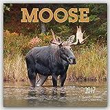 Moose 2017 Square Wall Calendar