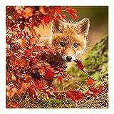 Fototapete - Fuchs im Herbst - Vlies Quadrat, Größe HxB: 240cm x 240cm