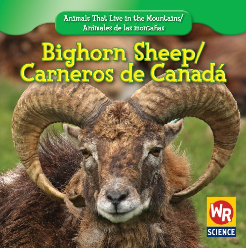 Bighorn Sheep/ Carnero De Canada (Animals That Live in the Mountains/Animales De Las Montanas) por JoAnn Early Macken