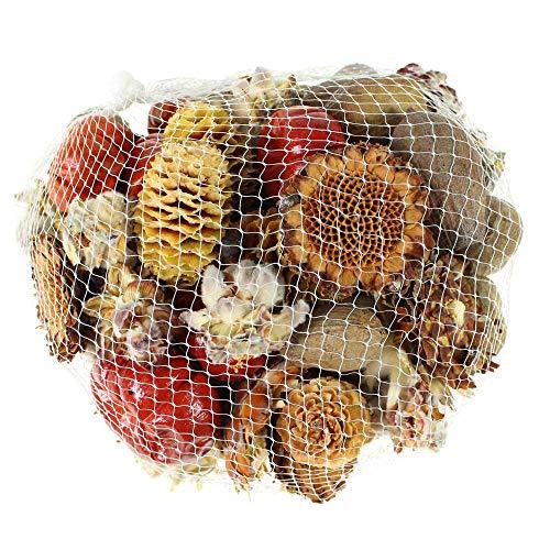 Exotische Frucht-mischung (Floral-Direkt 500g Exotikmix ca 80 Teile getrocknete Blüten Samen Früchte Mischung bunter Mix Herbstdeko)