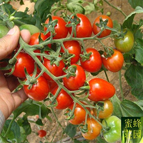 Top Mode de vente directe d'été Paysage Plante Graines petites exclus Persimmon Tomates de Santa Fruit Environ 100