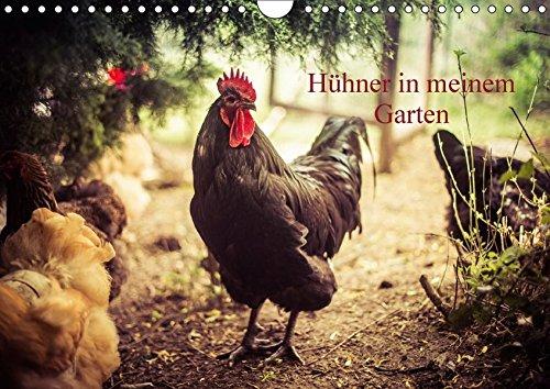 Hühner in meinem Garten (Wandkalender 2017 DIN A4 quer): professionelle Hühnerfotos (Monatskalender, 14 Seiten) (CALVENDO Tiere)