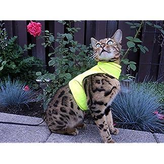 mynwood cat jacket/harness high viz adult cat - escape proof Mynwood Cat Jacket/Harness High Viz Adult Cat – Escape Proof 61GAv5m49pL