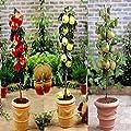Zwergbaum Kollektion - 1 kollektion von Meingartenshop auf Du und dein Garten