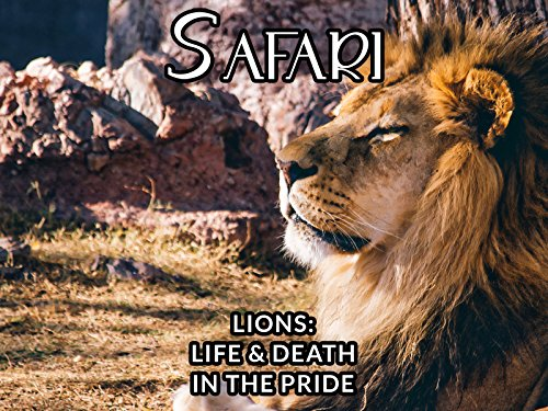 lions-life-death-in-the-pride