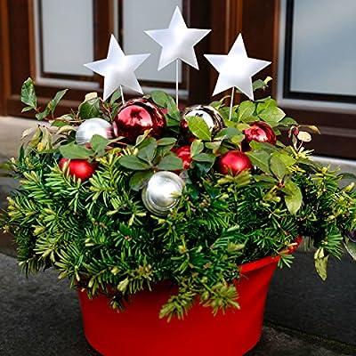 Gartenstecker Weihnachts-Stern, 3er-Set von Gärtner Pötschke auf Du und dein Garten