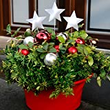 Gartenstecker Weihnachts-Stern, 3er-Set