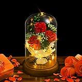 shirylzee La Bella y La Bestia Rosa Encantada Rosa Rojas con Luz de Hadas LED Base de Madera cúpula de Vidrio Regalo para día
