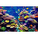Pitaara Box PB Coral Reef & Tropical Fish In Sunlight Unframed Canvas Painting 27 x 18inch