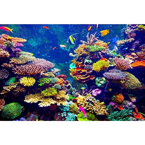 Pitaara Box Coral Reef & Tropical Fish In Sunlight Canvas Painting MDF Frame 24 X 16Inch - Home Essentials Reef