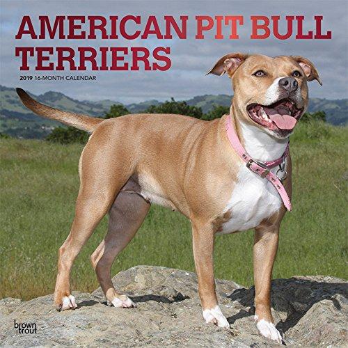 American Pit Bull Terriers 2019 - 18-Monatskalender mit freier DogDays-App: Original BrownTrout-Kalender [Mehrsprachig] [Kalender]