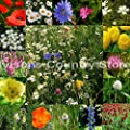 Ivisons 100% Wildflower Seeds No Grass Pure Meadow Wild Flower Bumble Bee Butterflies Mix 6