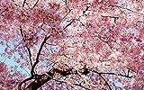 KEPTEI Garten Sakura Samen 50 Stück Blütenkirsche baum saat Kirschbaum Samen mehrjährige Pflanzen