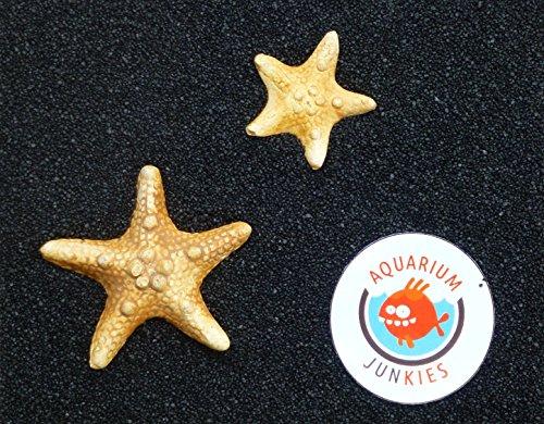 Aquarium-Junkies Schwarzes Meer 0,7-1,2 (25 kg)