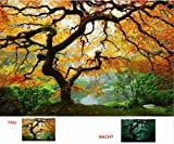Startonight Wall Art Canvas Maple Tree, Nature, Girls Glow in the Dark, Dual View Surprise Artwork Modern Framed Ready to Hang Wall Art 23.62 X 35.43 Inch 100% Original Art Painting
