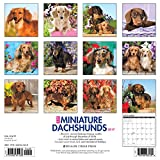Image de Just Miniature Dachshunds 2017 Calendar