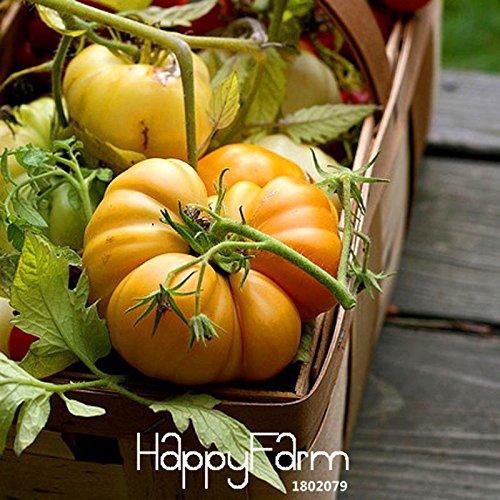 Großer Verkauf! 100 Samen / Beutel wie Kürbis Tomatensamen Balkon Obst Samen Gemüse Topf Bonsai Samen Tomaten, # EE4OWD