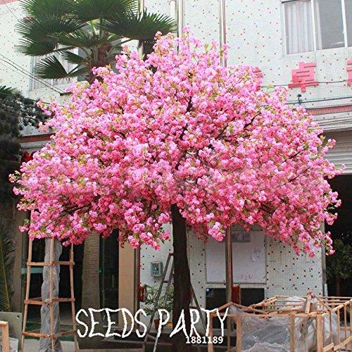Time-Limit !! 10 PCS Rouge Couleurs fleurs de cerisier japonais Semences Semences Courtyard Garden Bonsai Arbre petit arbre Sakura Graines Mixtes, # A