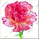 200 PC 16 colores disponibles clavel Semillas de flores perennes en maceta Las plantas de jardín de flores Semillas Dianthus caryophyllus 10