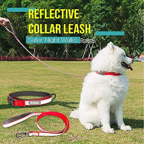 erende Nylon Hundehalsband und Leine Set 3 Farben Small Medium Big Hundehalsband Haustiere Leinen,Red,S ()