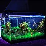 Chollos Amazon para Simbr - Luces LED para acuario...
