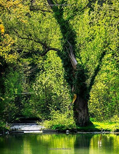 Banyan Tree Roots (Notebook: Tree spring mirroring waters leaves green forest wood shrub bark eucalyptus oak birch)